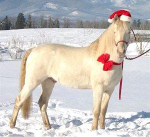 Christmas Spirit 042 3