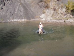 Spirit swimming at judged trail ride