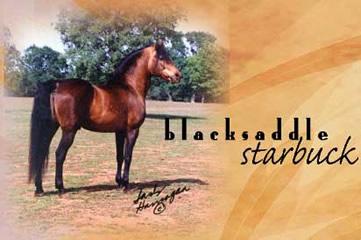 Blacksaddle Starbuck