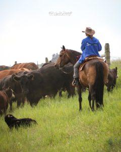 Buckskin Morgan Cowhorse